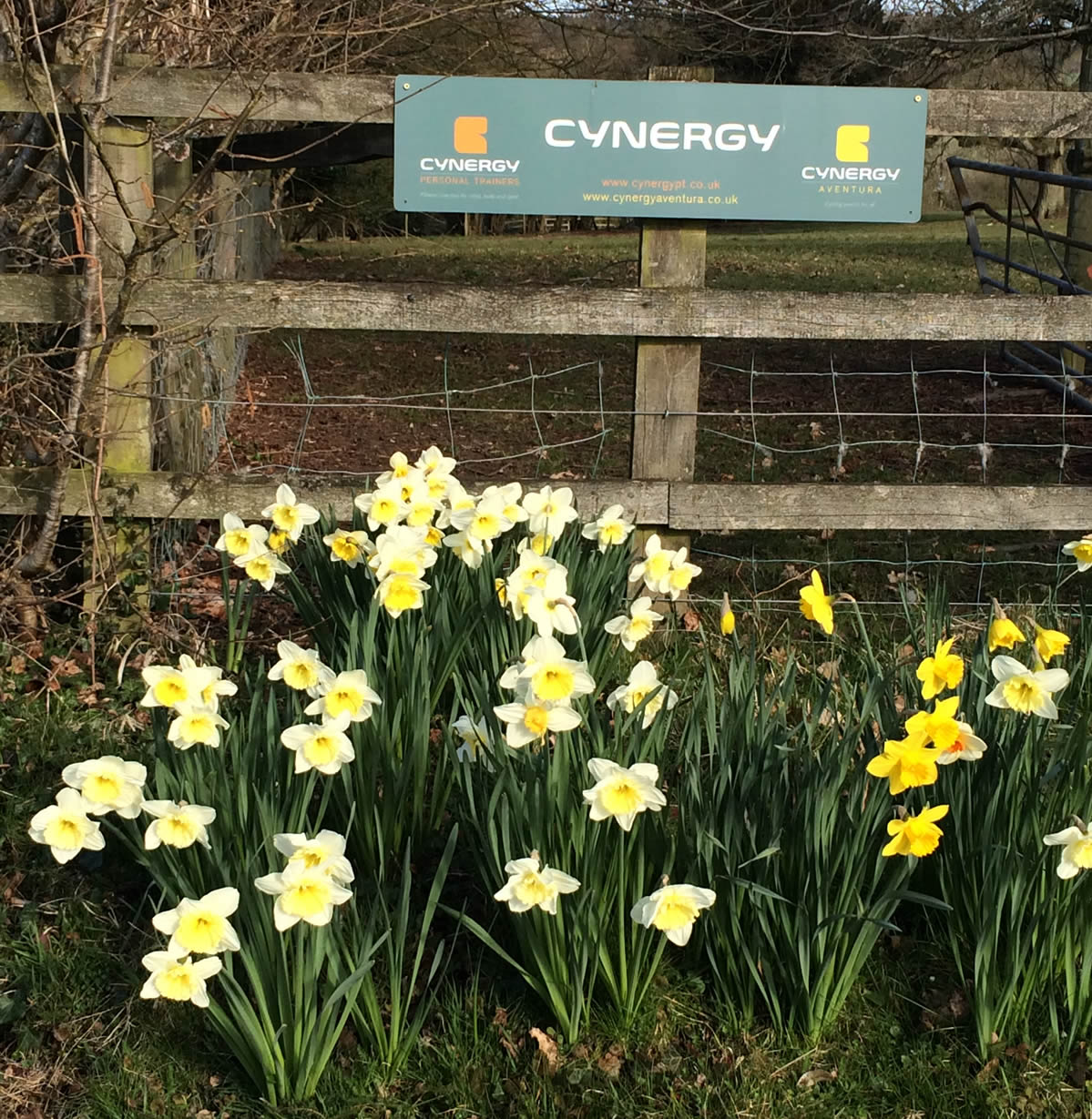 Spring has arrived at Cynergy PT!